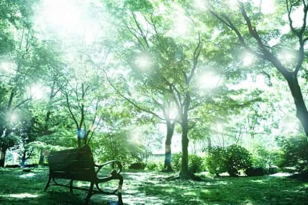 初デートの緊張を解く方法がイメージできる、癒しの森。